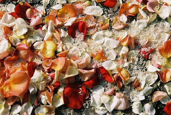 Riz et pétales de roses