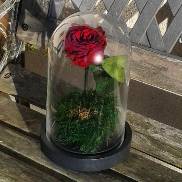Imaginez Une Rose Qui Ne Fane Jamais C Est Possible Chez Artifleurs